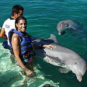 flipper- delfinul care s-a sinucis din cauza succesului