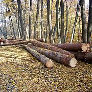 zonele in care se taie cei mai multi copaci