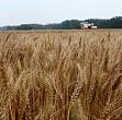 agricultura romaniei in pericol de faliment