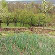 sase gospodarii afectate de o alunecare de teren la gornet cricov