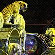 unde au fost duse animalele de la circul globus