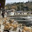 insula pisicilorfelinele sunt de 6 ori mai numeroase decat oamenii
