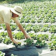 apia peste 255 milioane lei au intrat astazi in contul agricultorilor