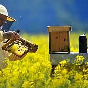 programul national apicol 2017 - 2019 va fi trimis in martie la bruxelles spre aprobare