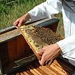 sprijin financiar de 302 milioane de lei pentru apicultori