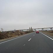 ursii carpatini blocheaza constructia autostrazii lugoj-deva