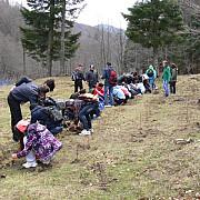 elevii din busteni au plantat arbusti pe valea cerbului
