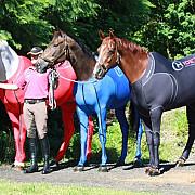 echipament pentru cai la olimpiada
