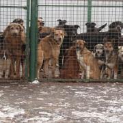 locuri noi pentru cainii fara stapan
