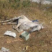 pedepse de pana la 10 ani de inchisoare pentru cei care maltrateaza animale