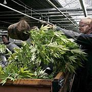 canabisul legalizat in cehia