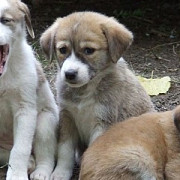 cainii fara stapan nu mai pot fi eutanasiati