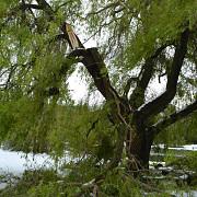 gradina botanica din chisinau a fost distrusa de viscolul care a traversat moldova