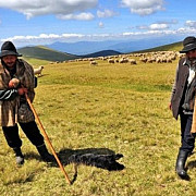 cum ajung vanatorii sa impuste cainii ciobanilor