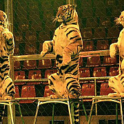 in grecia fara animale salbatice in circuri