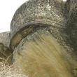 lana de aur la colti