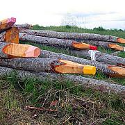 50000 de eco-creioane si 15000 de deodorante auto pentru garda de mediu