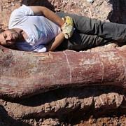 fosilele celui mai mare dinozaur descoperite de paleontologi in argentina