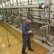 fermierii pot solicita ajutoare pentru bunastarea porcilor