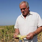 pana cand se dau ajutoarele pentru agricultorii afectati de seceta