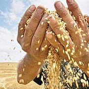 reducerea tva la paine temporara