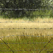 premiera trista in istoria ue ungaria ridica un gard la granita cu romania