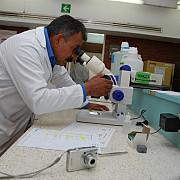 hartia care poate detecta hiv sau ebola