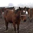 o crescatorie de cai unica in romania ar putea fi desfiintata