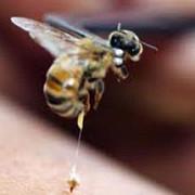 ungaria cel putin 18 persoane internate in spital dupa ce au fost intepate de albine