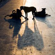 industria din jurul cainilor fara stapan