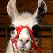animalele salbatice ar putea fi interzise in toate circurile din romania