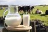 la vatra dornei laptele costa 40 de bani pe litru la fermieri in comert continua sa fie 4 - 45 lei