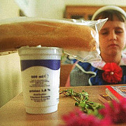 guvernul renunta la programul cornul si laptele