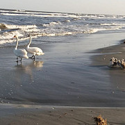 natura face show pe plaja din sulina foto video