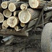 ue interzice comertul cu lemn taiat ilegal