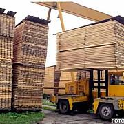 exportul de busteni cherestea si lemn de foc suspendate pana la 31 august