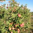 prima pepiniera de pomi fructiferi din soiuri traditionale