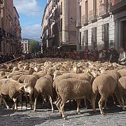 peste o suta de mii de biciclisti si doua mii de oi prin centrul madridului