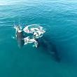 o familie de balene a oferit un spectacol inedit aproape de tarm