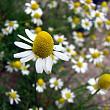 fonduri europene pentru cultivarea plantelor medicinale