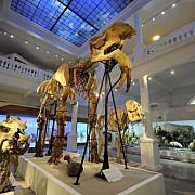 muzeul antipa va gazdui o noua expozitie consacrata dinozaurilor