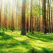 romania singura tara din lume care nu aplica managementul forestier durabil