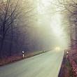 perdele forestiere pentru drumuri si autostrazi
