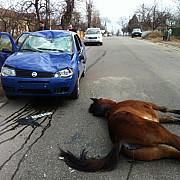 foto un cal lasat de izbeliste a zdrobit o masina