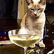 japonezii au inventat vinul pentru pisici