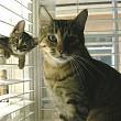 bucurestiul ar putea avea o unitate de politie pentru protectia animalelor