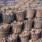 cartoful poate avea 40 de boli