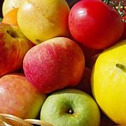 rusia interzice temporar importul fructelor moldovenesti