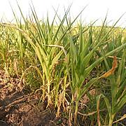 masuri in favoarea agricultorilor afectati de seceta