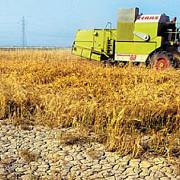 despagubiri pentru fermierii afectati de seceta